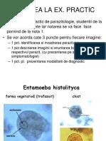 protozoare helminthiases