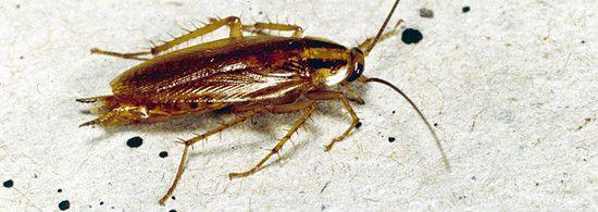 exterminator parazit