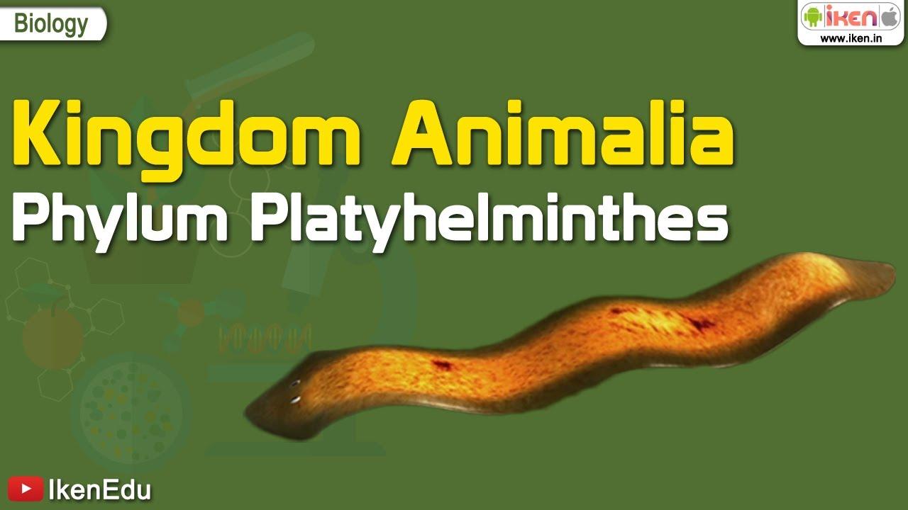 Clase și exemple de platyhelminthes - coboramlaprima.ro
