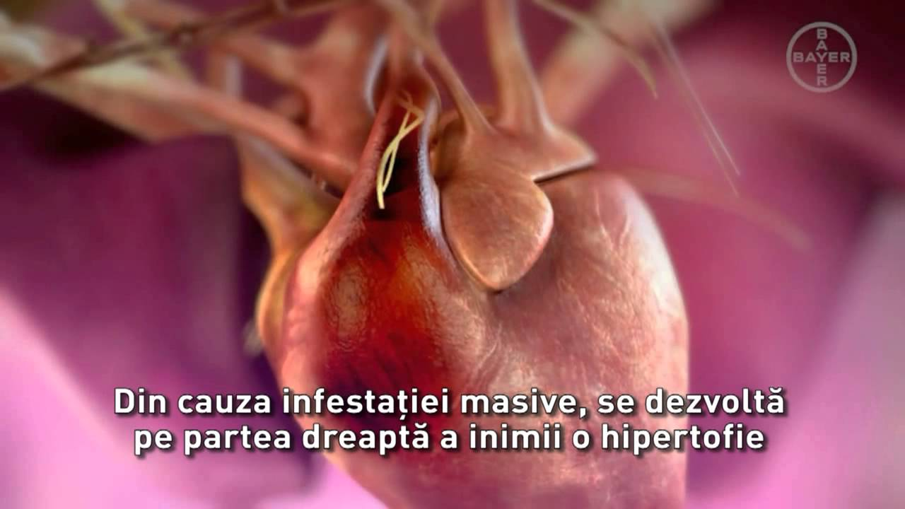 pledează viermele inimii