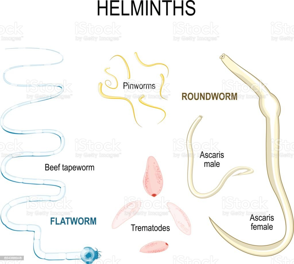 Helminths - Simptome