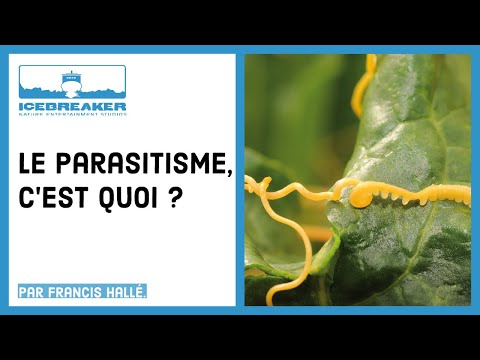 paraziții sunt exemple de organisme hpv vs herpes