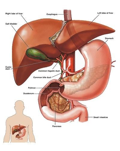 Curățarea Pancreasului – Rețete Naturiste Bune și Pentru Ficat și Bilă