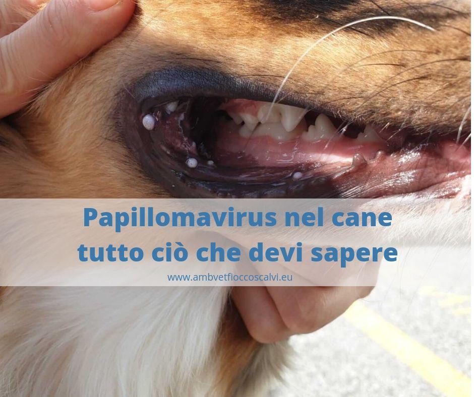 Guarigione dal papilloma virus - Artroza post - operatorie Papilloma virus tempi di guarigione
