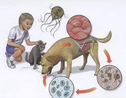 pastile în cerc și viermi afară