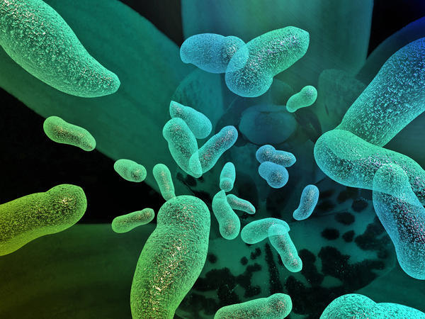 bacterii daunatoare