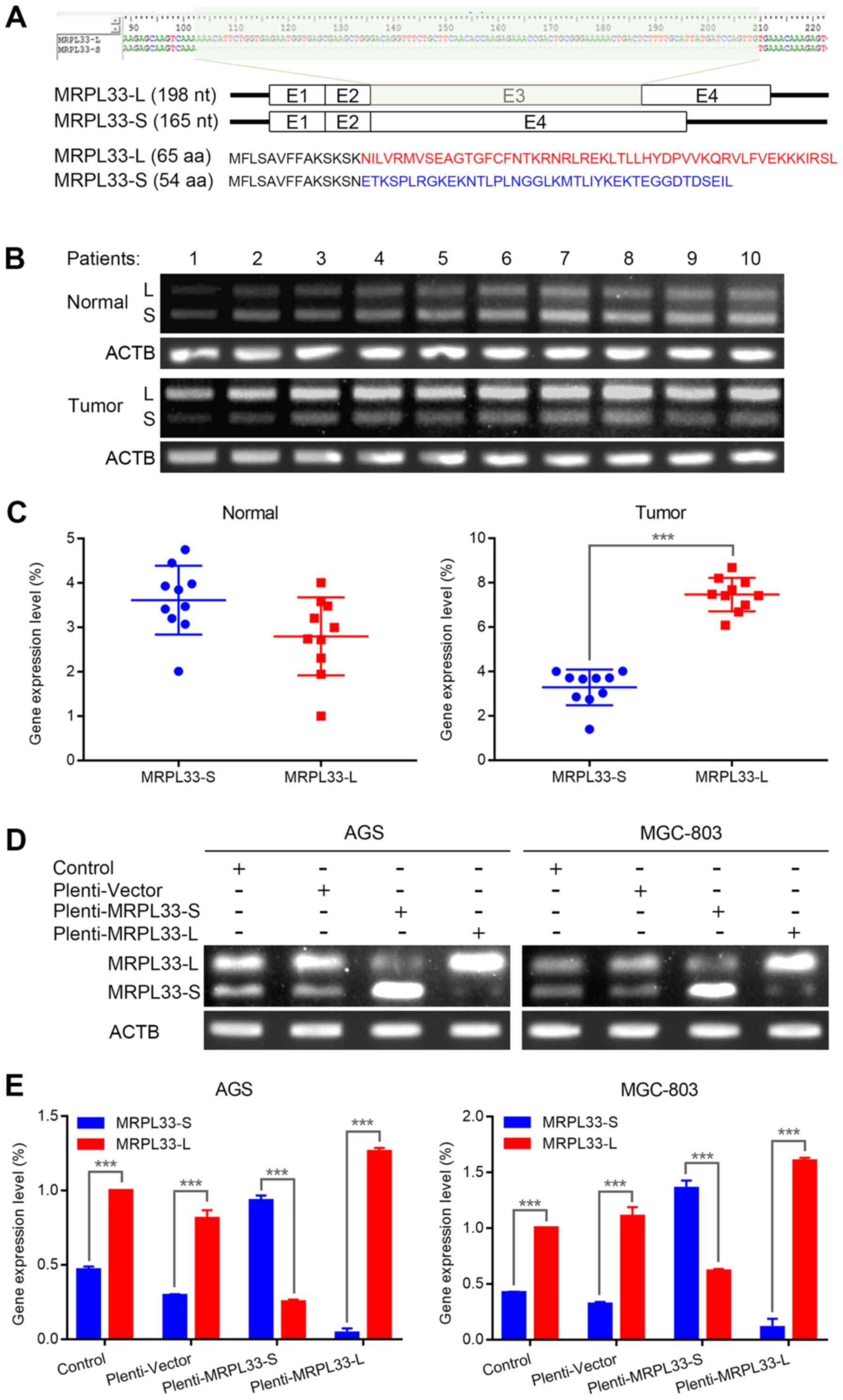 gastric cancer variant krvni paraziti kod pasa