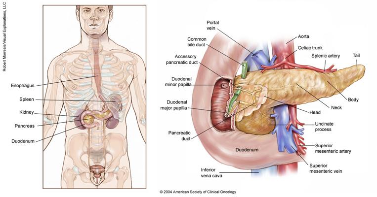 cancer pancreatic body viermii trăiesc în afara oamenilor?