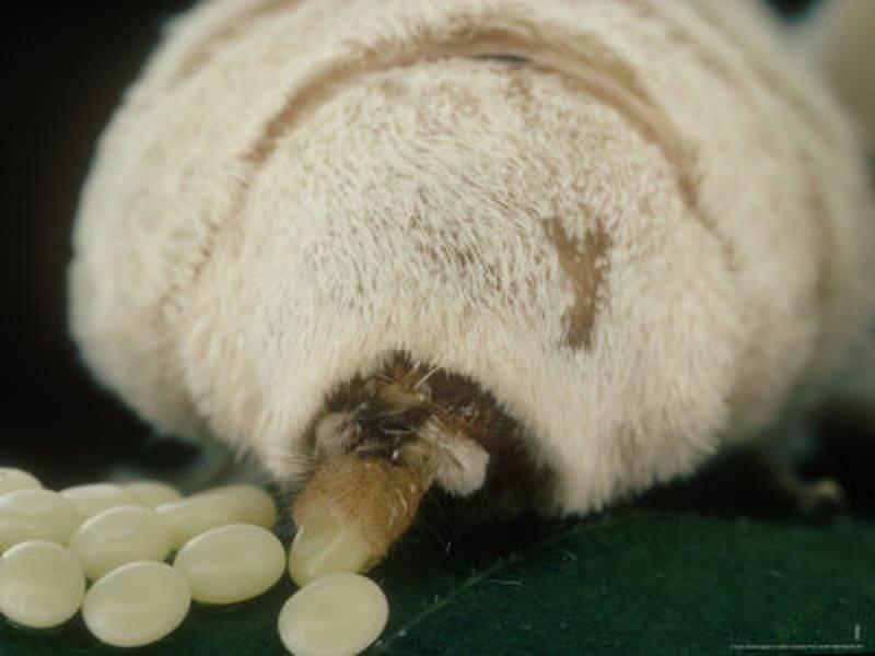 vărsături de droguri după viermi