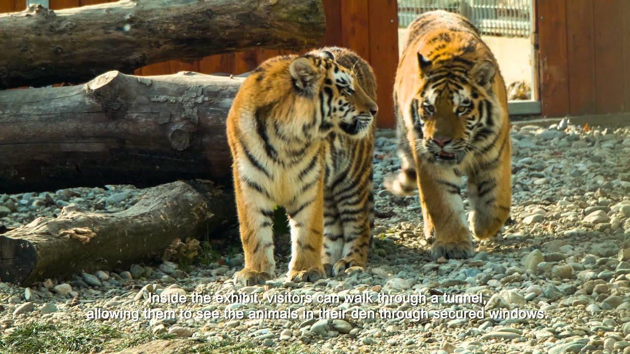 nemathelminteze nevertebrate zoologice