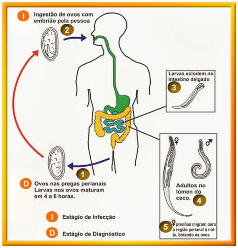 Mebendazol Fabra | myHealthbox Oxiuros ascaris