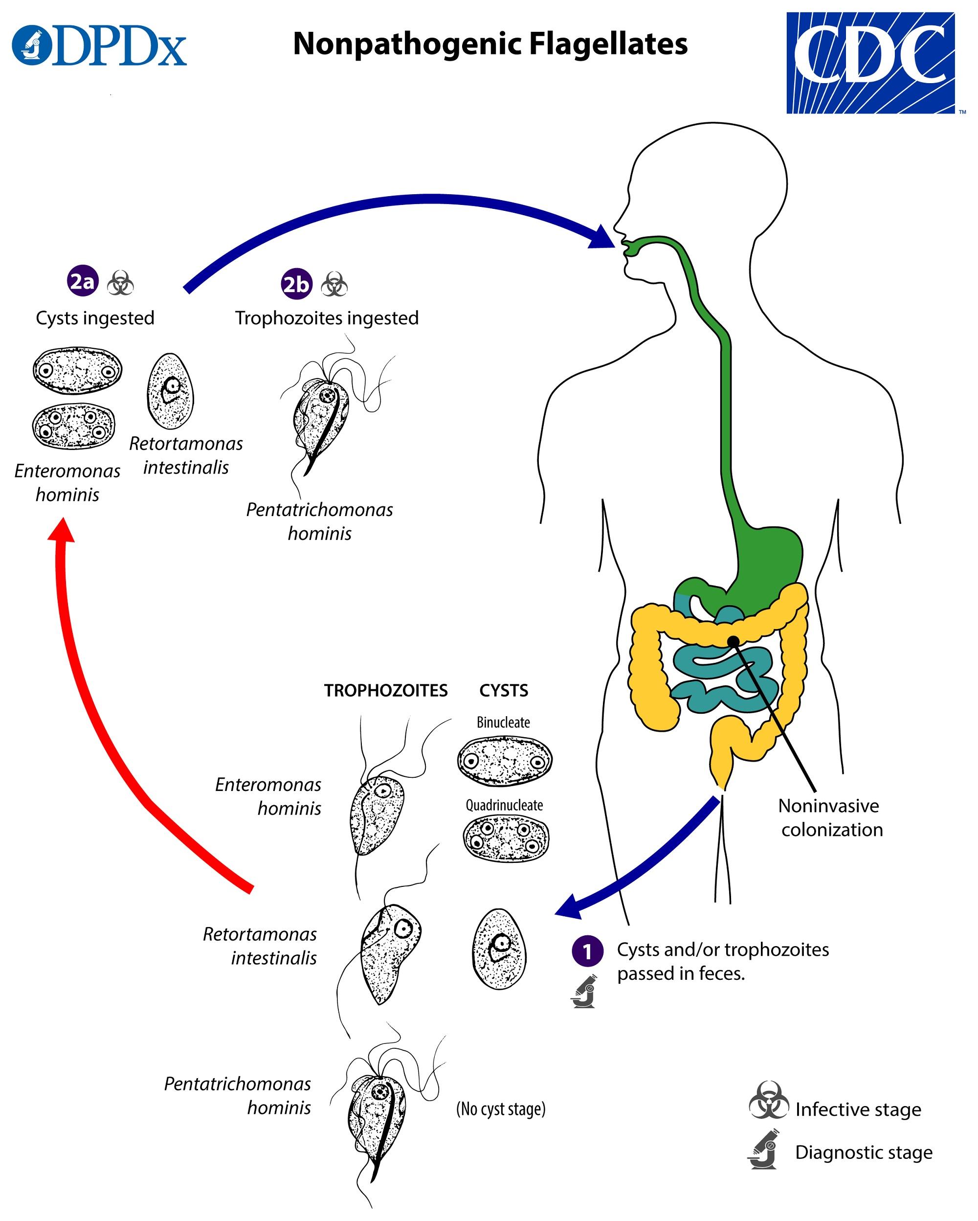 Recomandări clinice pentru giardiază