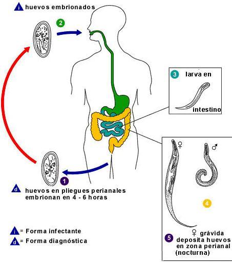 forum care a născut cu negi genitale anthelmintic action