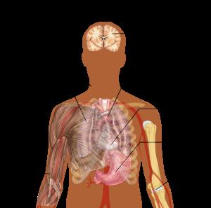 paraziți în tratamentul plămânilor umani can hpv virus cause fatigue