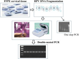 pcr for papillomavirus