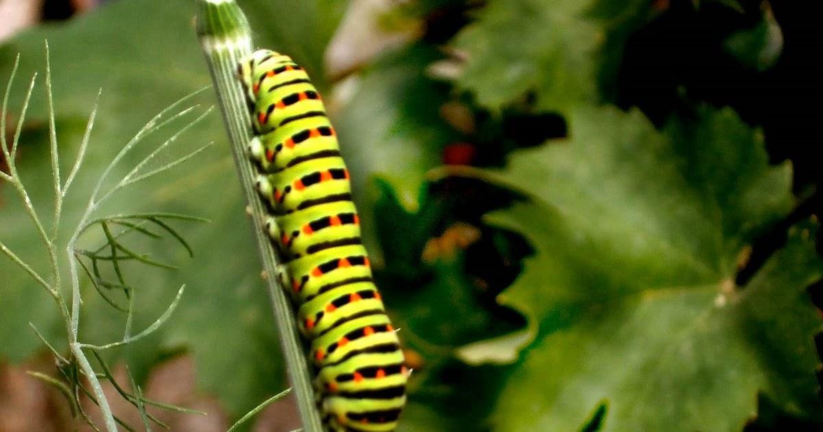 38 Best paraziti images   Sănătate, Remedii naturale, Remedii naturiste